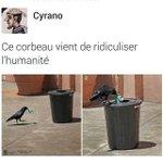 este corvo acabou de ridicularizar a humanidade http://t.co/U7LUHSqXkB