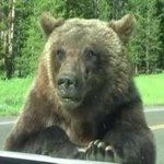Família filma encontro com urso em 'parque do Zé Colmeia' http://t.co/oeEAFlhTDK #G1 http://t.co/Wj0PYNMS2F