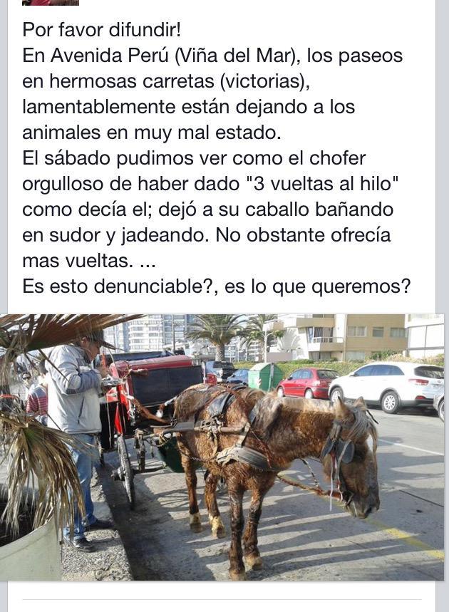 #MeEnamoraQue me ayuden a difundir esto #CiudadJardin #ViñadelMar #Chile http://t.co/JXXiNw655R