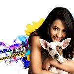 #Trisha Says She Will Get Married Under One Conditon!   http://t.co/f7PWj7atHL
