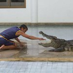 Koh Kong wildlife park that hosts crocodile shows, orangutan boxing to move to Phnom Penh: https://t.co/swhf0KObLk http://t.co/kH4HaDhzP0