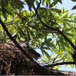 #Acapulco te sorprende en cada rincón...naturaleza sabia y noble 2) http://t.co/kf01eykB7p