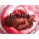 """الحياة باختصار : """"من الله ، لله ، الى الله"""". http://t.co/vxwKQ9XgMK"""