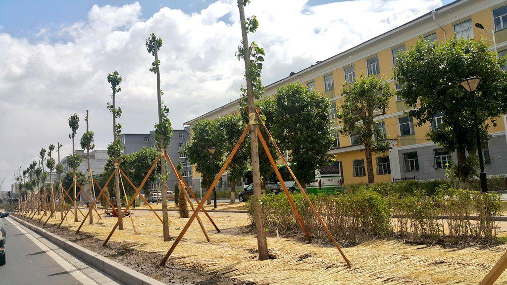 Хятадууд модыг мундаг тарих юм. Бүгд ургажээ. Хүүхдүүдээр биш яг энэ шиг мэргэжлийн хүмүүсээр нь тариулмаар бгаам даа http://t.co/pHqrv6dg2U