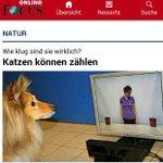 """""""Katzen"""", oder : Focus-Redakteure - wie dumm sind sie wirklich? http://t.co/CPWS0KP2u6"""