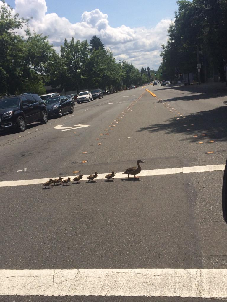 At least they're using the #crosswalk! NE 4th St at 112th Ave NE @bellevuewa http://t.co/4VxxaHboun