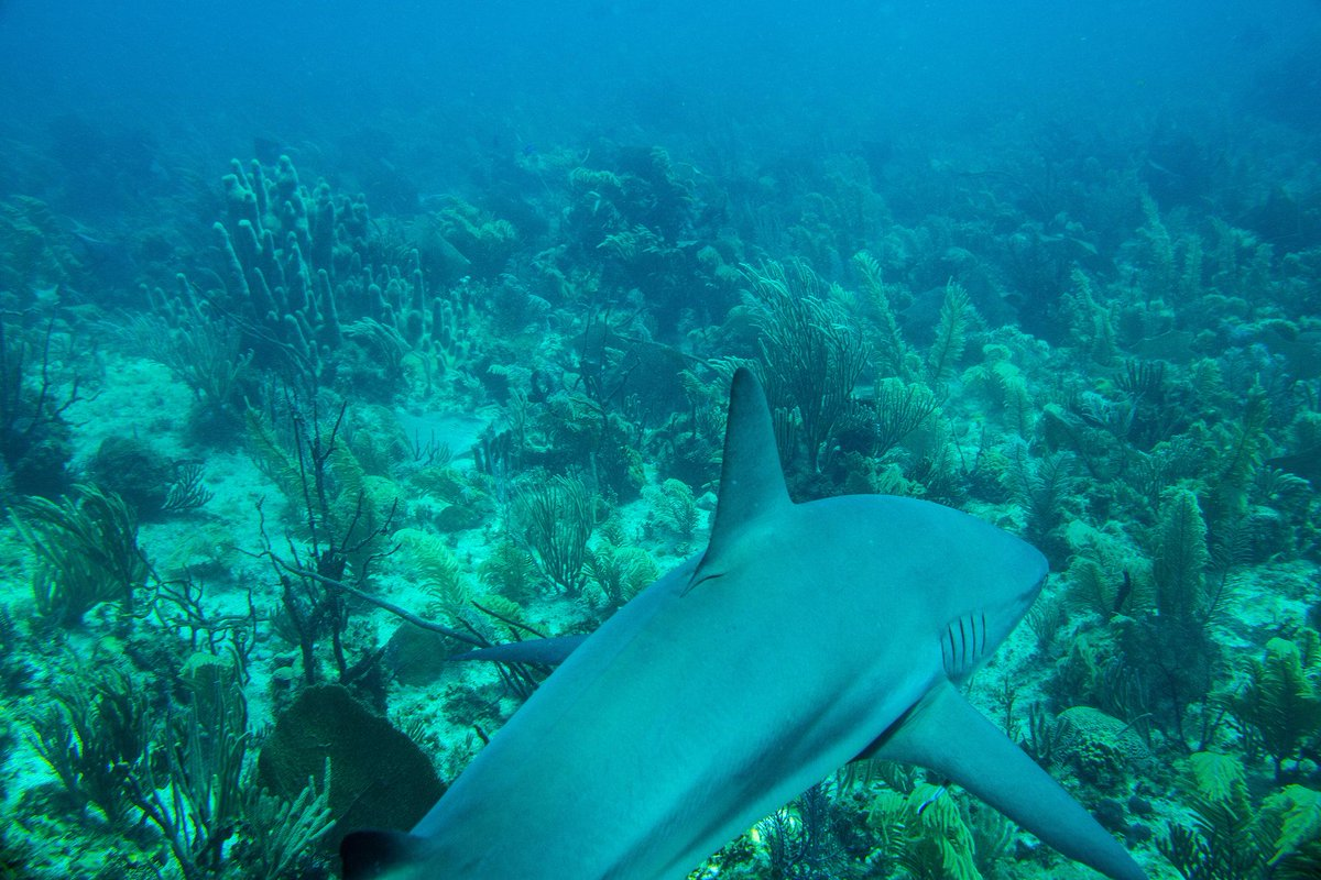 RT @Seasaver: Crown jewel of #Cuba's #coral reefs http://t.co/Xqm5eNHSC4 @nytimes http://t.co/UveZiAAe50