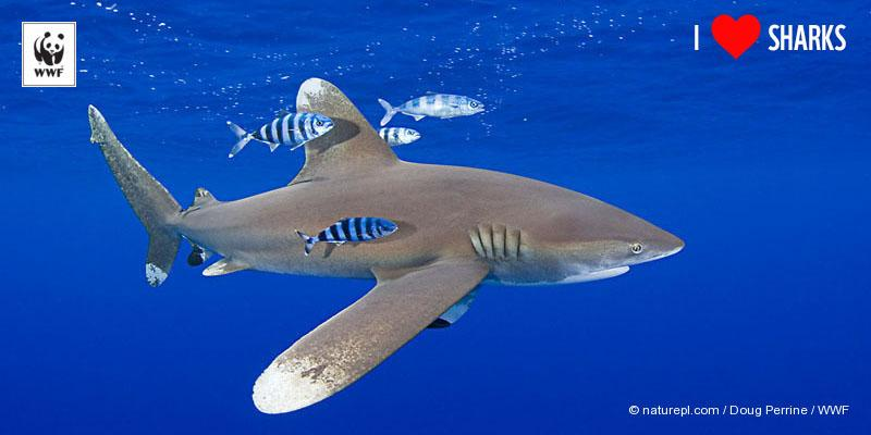 RT @WWF: Happy #Shark Awareness Day! RT this to let the world know you love these #amazinganimals http://t.co/UqII33quKu