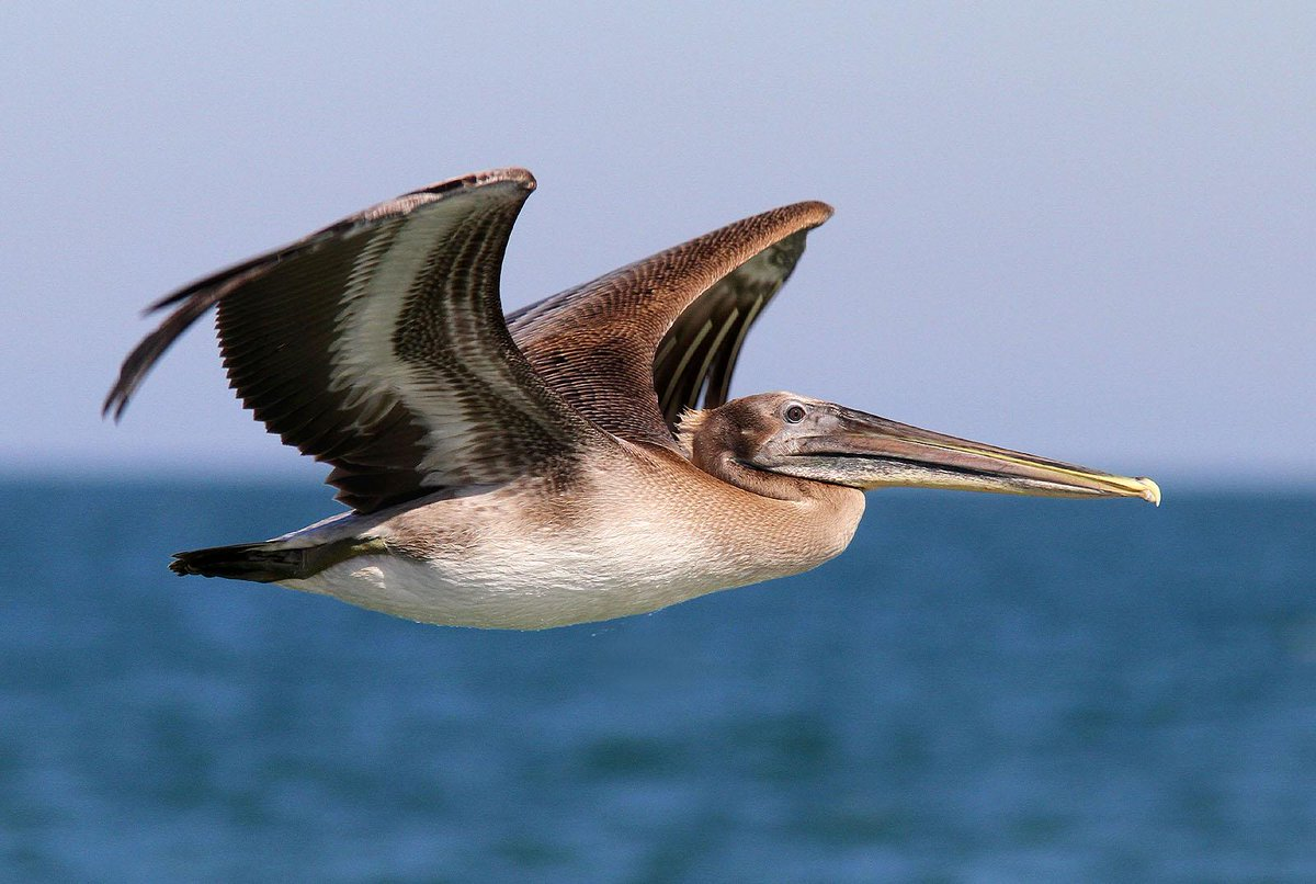 RT @WildlifeDay: The world has lost about 230 million seabirds in 60 years http://t.co/NcA77v2fA5 #ProtectWildlife http://t.co/QzM88xkqUE