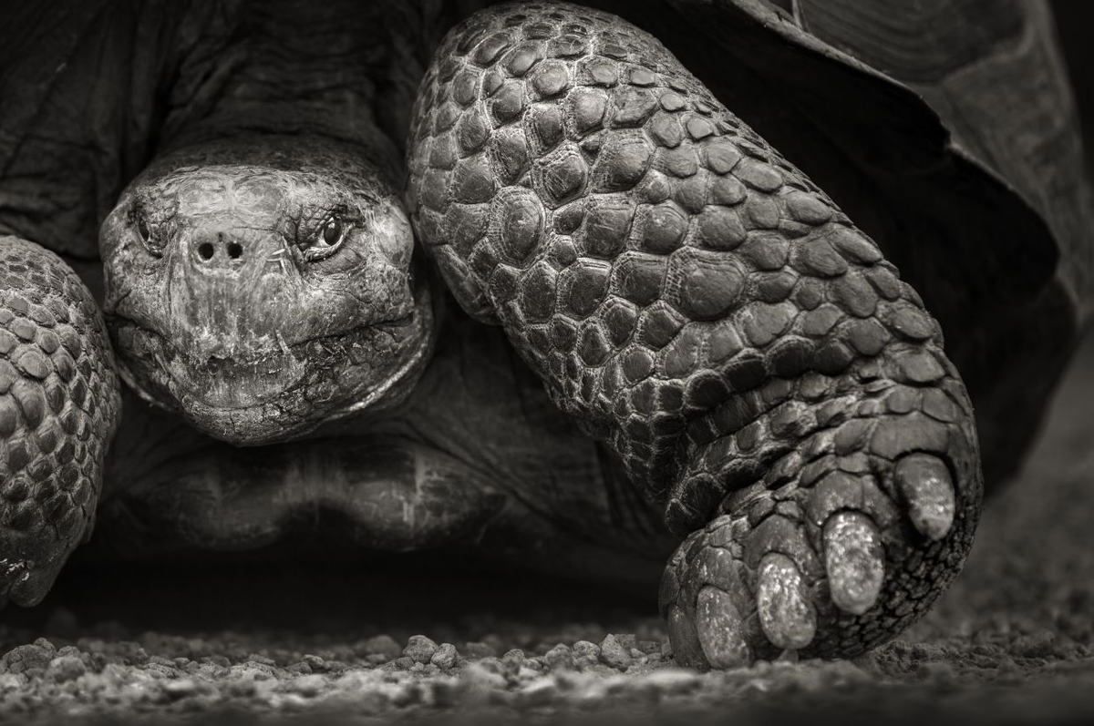 From our new issue: born before the Battle of the Somme, a 100-year-old tortoise still walks on the Galapagos Islands http://t.co/tw7Ckn8PRo