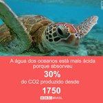 Cientistas dizem que propostas de redução de emissão de CO2 podem levar a perda maciça de vida marinha #Ciencia http://t.co/ZYXIrP1wTn