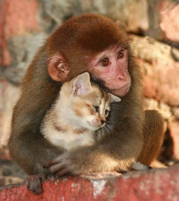 We can learn love from animals, who don't see differences of skin color... #AllLivesMatter http://t.co/xH6Ro0MqCj