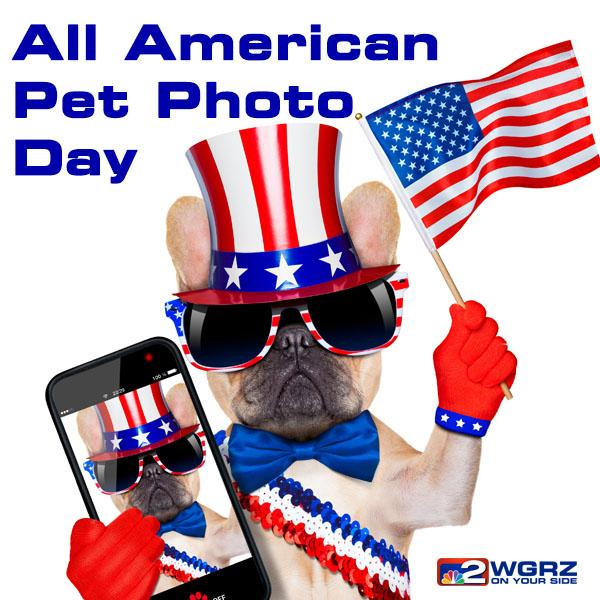 Image result for all american pet photo day