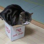 金魚鉢に入る巨大猫と、「箱好きな猫」たち http://t.co/fOz6tubdF7 http://t.co/uK03oWvNSB