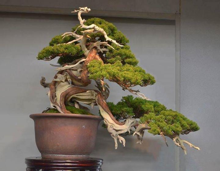 Amazing trunk line, photo by Diego Colleoni #bonsai #art http://t.co/IZNedBLCdc