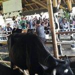 [PHOTO] Para peserta event OFC dan member JKT48 diberi penjelasan mengenai sapi perah #jkt48ofc2cimory http://t.co/NQsvqeFoZ4