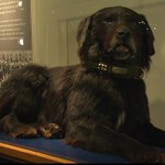 Meet Sable Chief.  Royal Newfoundland Regiment mascot during #WWI.  RT to pass him around!  http://t.co/KUHr4rCLez http://t.co/6n3PgxdGBA