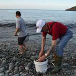 @DFO_NL wants you to tweet or call them if you see capelin rolling. 709.722.6578 or use #CapelinRoll2015 #nlwx http://t.co/yZ65PAWTZm
