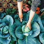 Cool RT @detikcom: Growing Underground, Lahan Pertanian Pertama di Bawah Tanah http://t.co/aSqpQ97Uz1 via @detikfood http://t.co/oCQJOOo45y