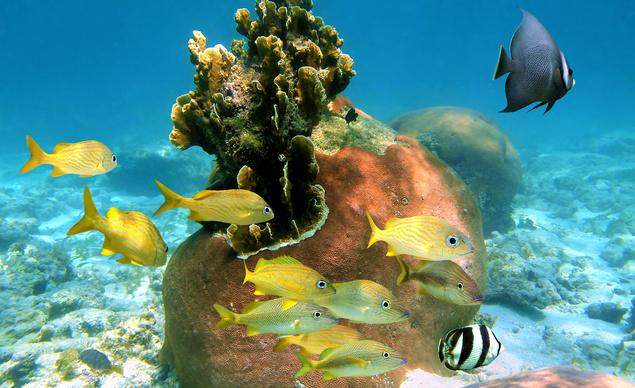 The Bahamas are a great place to explore underwater. @VisitTheBahamas