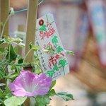 【二十四節気「小暑」・七十二候初候「温風至る」~季節の風物詩と言えば…?】 http://t.co/SNxrjHFkQT そろそろ梅雨明けが待ち遠しいころですね。今年の「小暑(しょうしょ)」は7月7日….. http://t.co/wMBAgfgXUp