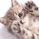 Aprenda a cuidar las patas de sus mascotas http://t.co/WSObGwix7S http://t.co/jILuq4DQNj