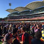 A moments silence, before siren sounds & fans flock onto #AdelaideOval #weflyasone http://t.co/9xrxmqqGCY