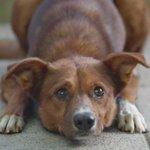 【話題】『おじいさんを待ち続けた犬』 臓器ドナー登録推進の動画が700万回再生 http://t.co/ELlwGukG8z http://t.co/vI0nyZvWYQ
