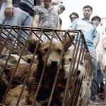 【世界のミニナビ】中国で「犬肉祭」…「何が悪い」と1万匹、盛大に食べ尽くす 世界から約400万人が抗議 - 産経ニュース http://t.co/tqto4YCaAM @Sankei_newsさんから http://t.co/lvyKZtltgt