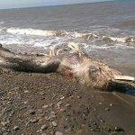 El cadáver de una misteriosa criatura desconcierta a la comunidad científica http://t.co/zxFRyq30o0 @hoyextremadura http://t.co/QIfuIfPWYF