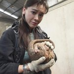 Hong Kong celebrity Sharon Kwok recounts her experiences fighting to stop pangolin poaching. http://t.co/pIwCUo6BGp http://t.co/Hrl2MVRw2k