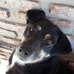 perros lindos...y Mostachol..#beautiful adoptate un osito cariñoso #BuenDomingo @candetinelli @lulifernandezok http://t.co/cytEZIXoCQ