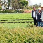 En los 21 viveros de @Probosque_ del #EdoMéx. Se cuidan los arbolitos para la reforestación 2015. @eruviel_avila http://t.co/Z8hkBn3R8V