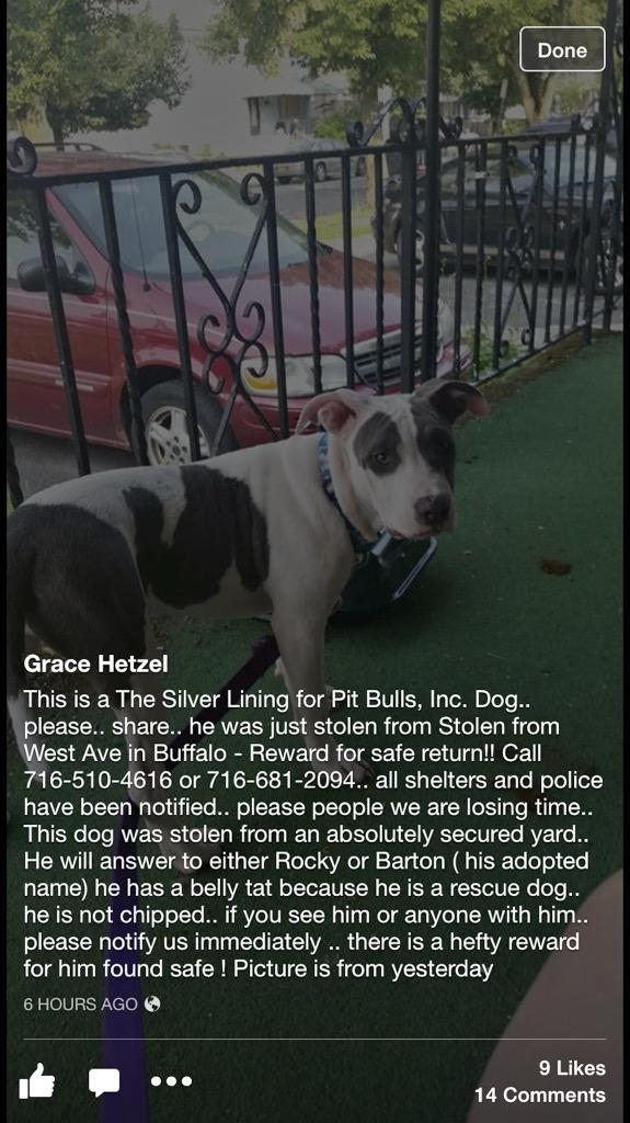 Hey guys, a rescued pitbull was stolen from a family on West Ave. Keep an eye out and share this. http://t.co/AhktTAdkly