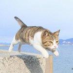 猫モチーフの作品が集結!「ねこ専 2015浅草」開催 - 雑貨、写真、食器などを展示販売 http://t.co/fNTzwSNYTL http://t.co/fv4Sk3iigh
