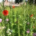 @GrowWildUK our wild flower garden is looking good at Chapel Allerton School #Leeds @friendsofCAPS #bees http://t.co/rKgbl9wvA3