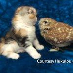 ビデオ:大阪市のカフェで暮らすフクロウと子猫、ネットで話題(字幕・3日)http://t.co/AcjYimAwva http://t.co/sxSCpDWNOc