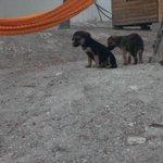 Ayer me encontré a estos 2 cachorritos en un campo abandonados por favor difundir por si alguien los quiere!! http://t.co/vKMR9I4XAU