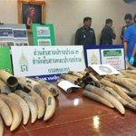 タイで象牙250キロが押収されました - 産経ニュース http://t.co/Lug2Nl59TU #news http://t.co/Zc2KR66Yy2