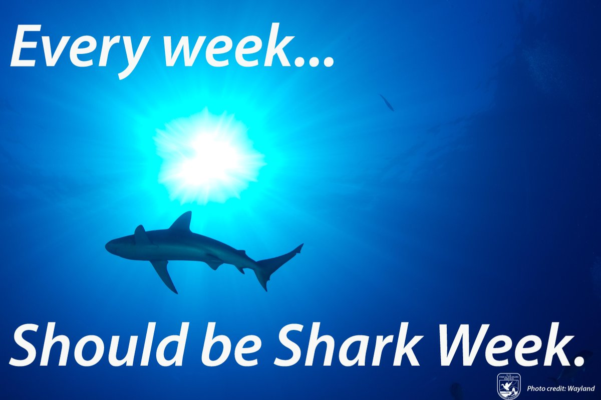 It's #SharkWeek! Celebrate by sharing #FactsNotFiction about sharks. http://t.co/4CQSEGkjQd