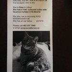 Hey @Inglewoodyyc neighbours! Keep a look out for this pretty little feline #mrspuff #inglewood http://t.co/kpWqohNdka