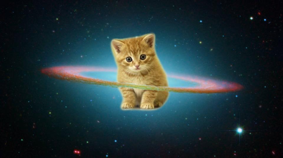 обои на рабочий стол космос коты № 2288047  скачать
