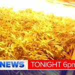 $1.5 million worth of ice, 100s of marijuana plants seized in QLD police drug busts @seanpower9 @ShannonMM9 #9NewsAt6 http://t.co/iPHmCXJkZs