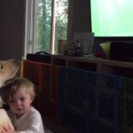Video of Grand Rapids-area dog mesmerized by Womens #WorldCup final goes viral http://t.co/sGHbCJcrT8 http://t.co/EP2xWmNRyd