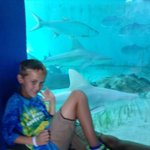 There is no better place to celebrate #Sharkweek2015 #SharkWeek than @MoteMarineLab where you learn all about them! http://t.co/GZgMoA0FcL