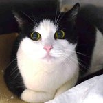 FRIENDLY TINKERBELL w/MESMERIZING EYES N #NYC ACC DEATH ROW! SAVE B4 NOON WED FROM #NYC ACC http://t.co/166zHjW7tH http://t.co/CSNb6iP6zm