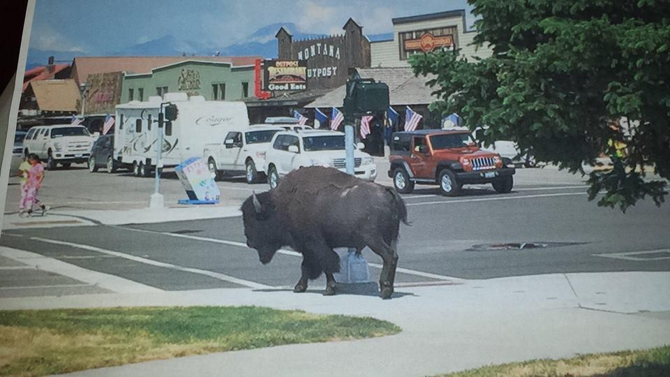 I always tell visitors~bison are like ninjas. Be aware of your surroundings around @YellowstoneNPS @WYellowstoneMT http://t.co/aFCwl23vow