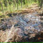 $16K fine for #pipeline spill not even a slap on wrist: #Greenpeace http://t.co/eWufdmMePC #cdnpoli #abpoli #tarsands http://t.co/31Qhqf3TMO