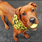 PLS RT????to be killed 7/8????pls HELP http://t.co/b3V9HGVk0g #NYC #DOGS #rescue #adopt #foster #pledge @Gdad1 @jewelofark http://t.co/ZguZJqtk9k