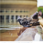 For photos #OnThePlaza at our Boston HQ, follow us on Instagram at @csmonitorpics! http://t.co/uHB0CZp2ca http://t.co/YRVNZLVqNK